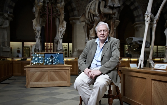 david-attenborough-22000-px-for-folio